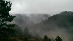 Forest Transylvania