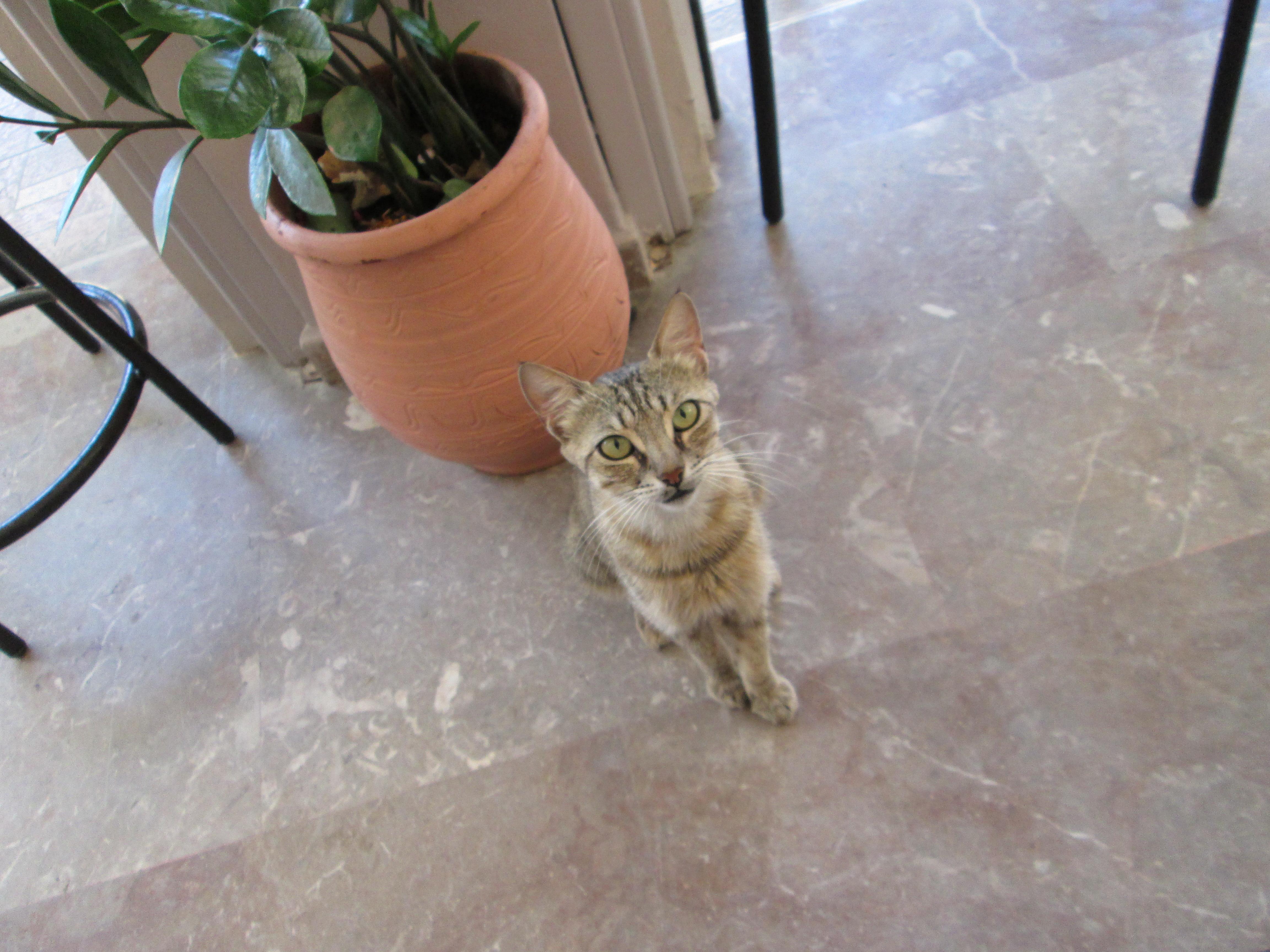solo travel tips Corfu cat