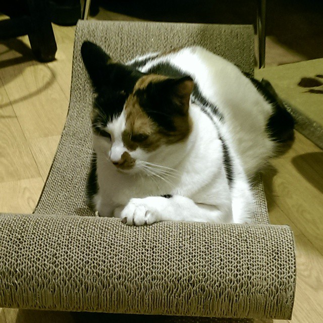 Lady Dinah's Cat Emporium London cat cafe