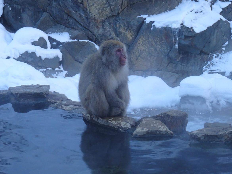 Visiting snow monkey park Jigokudani from Tokyo