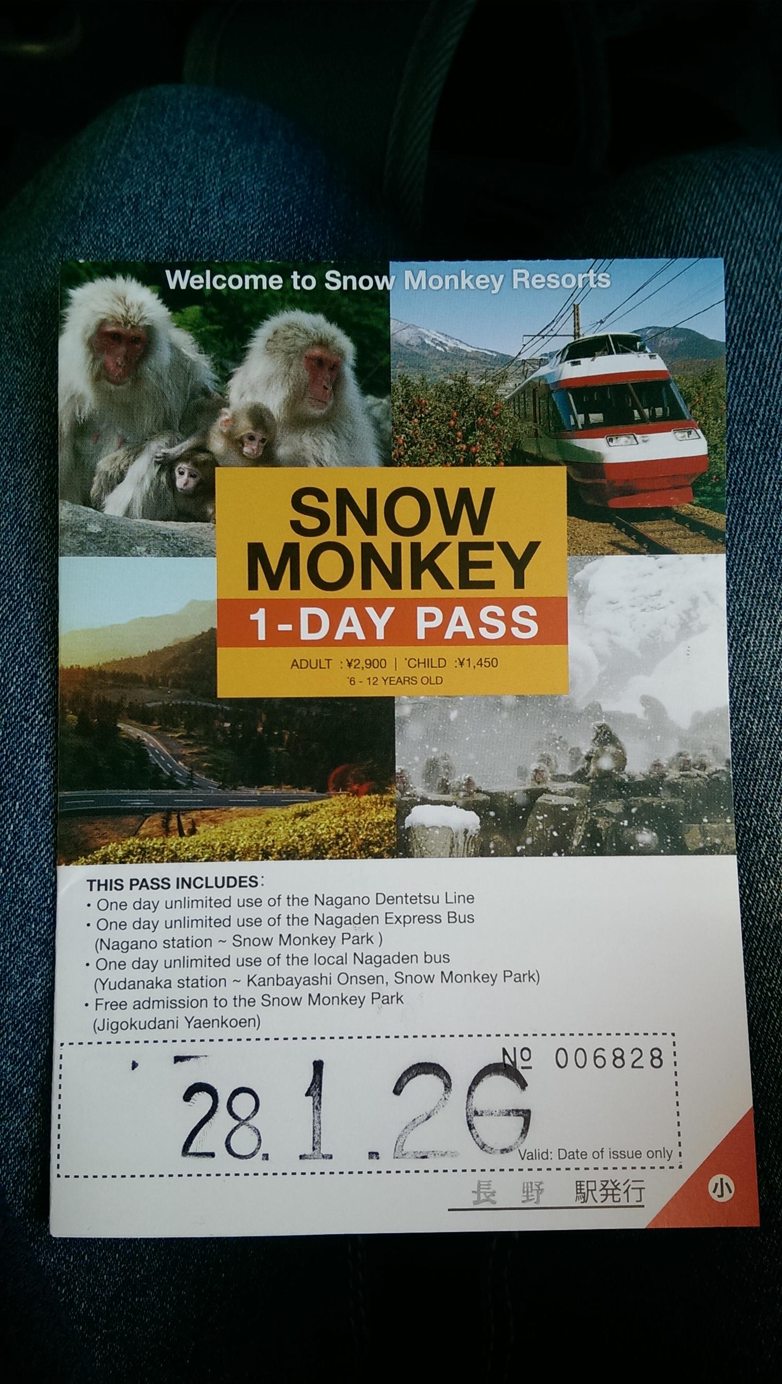 Nagano snow monkeys Jigokudani