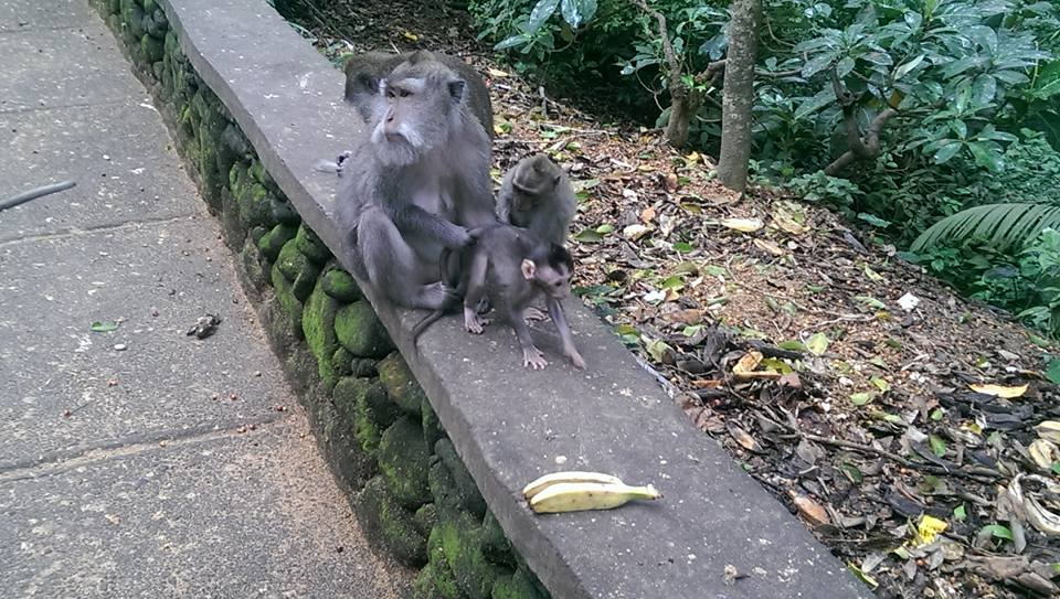 Ubud Bali solo female travel Monkey Forest