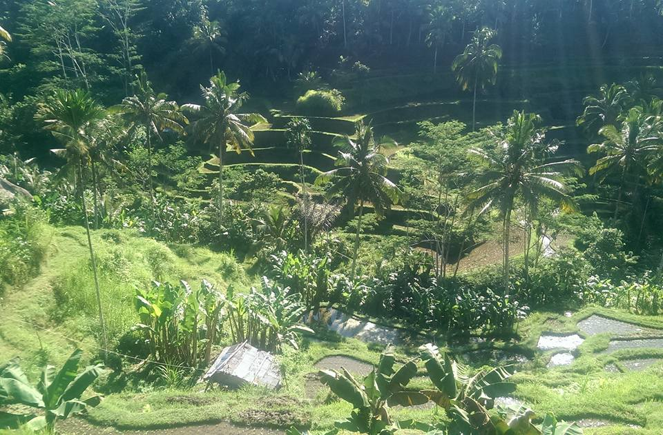 Ubud Bali solo female travel