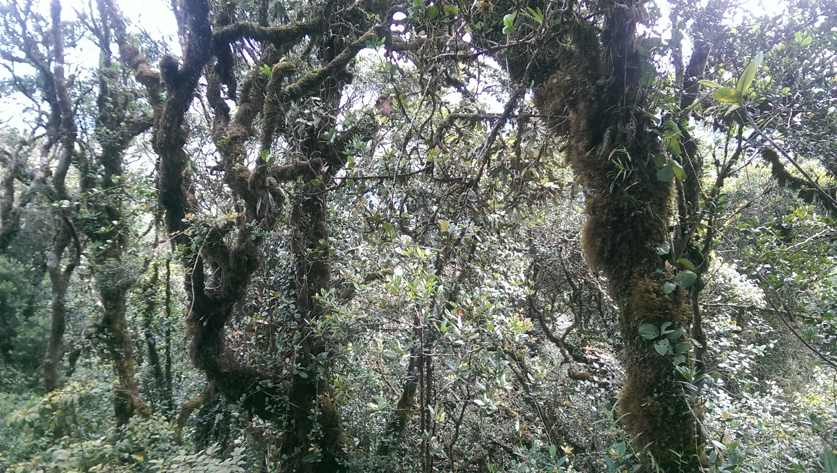 Malaysia Cameron Highlands solo female travel Mossy Forest