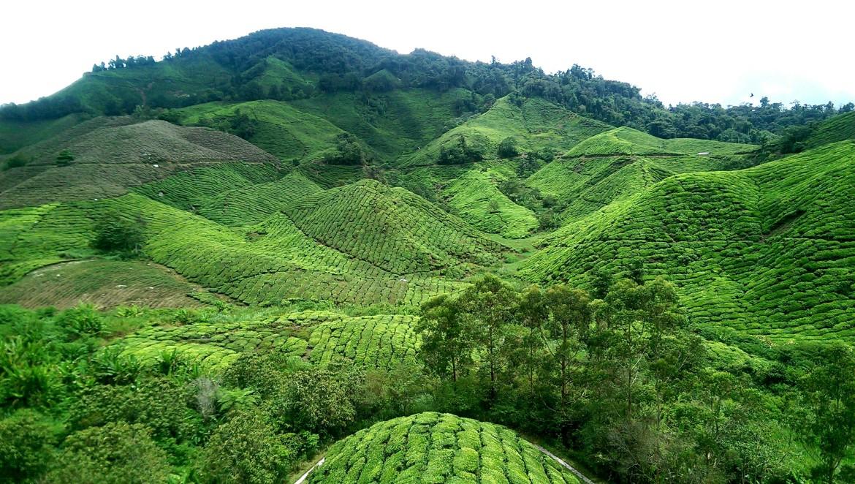 Malaysia Cameron Highlands solo female trave