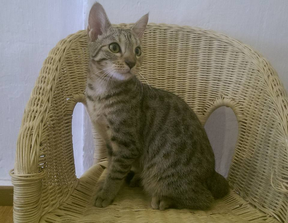 George Town Penang Malaysia solo female travel cat cafe