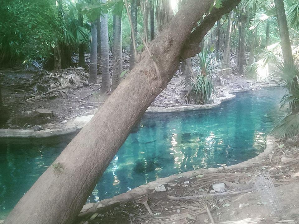 Mataranka pools, Northern Territory