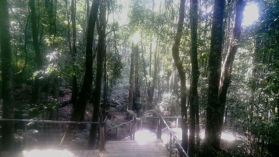 Scenic Walkway Scenic World Blue Mountains Australia