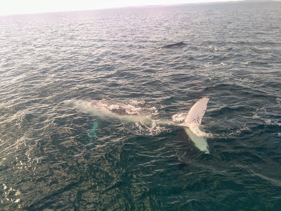 whales Fraser Island Australia