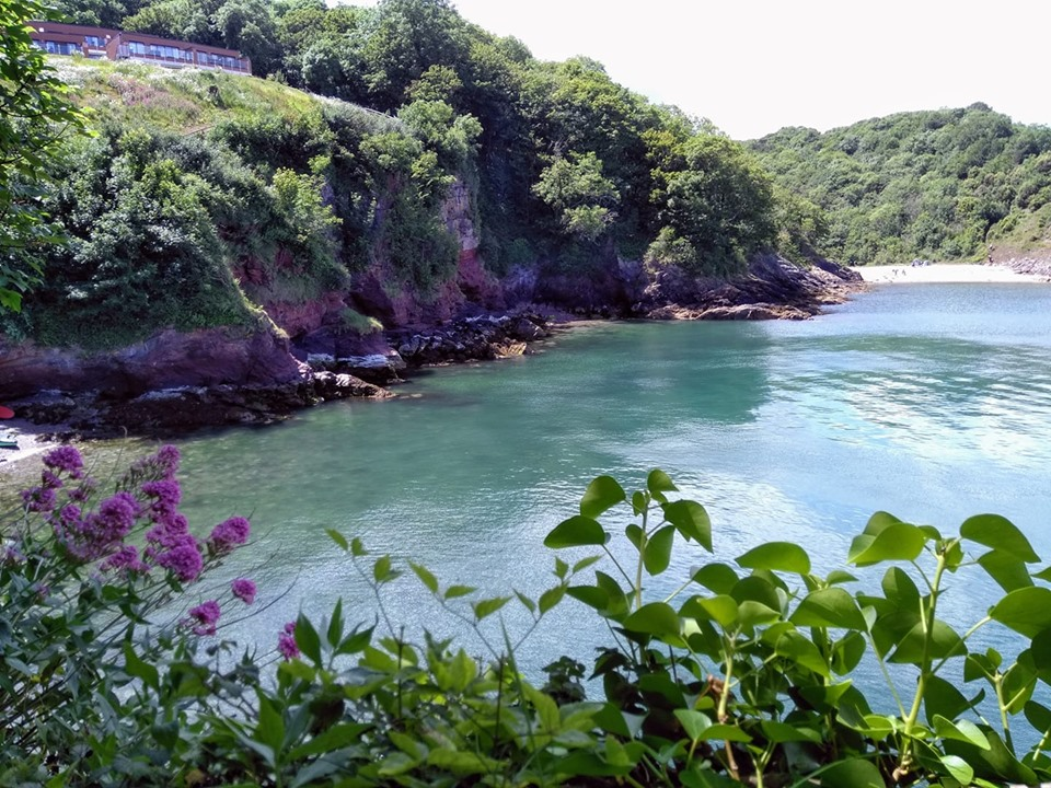 Blue sea water in a bay framed by cliffs and purple flowers on the coastal walk
