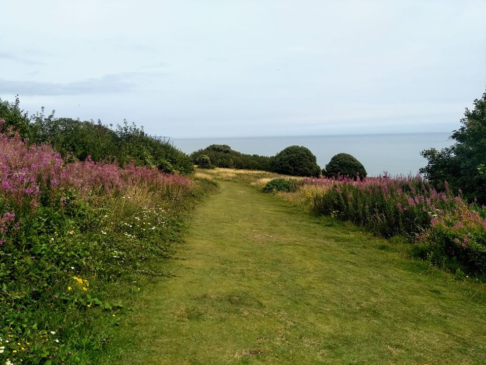 Flowers and grass on the descent into Eastbourne